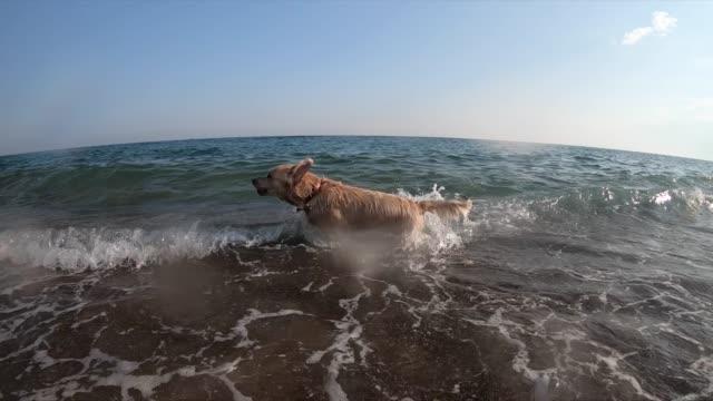 vidéos et rushes de le garçon et la natation heureux de mère esprit son crabot sur la mer - femme soumise