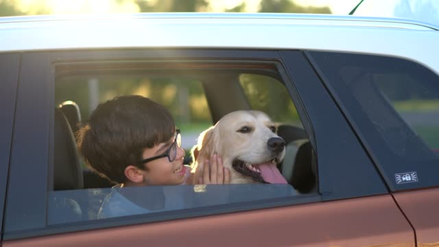 happy boy looking with her dog from window of car - purebred dog stock videos & royalty-free footage