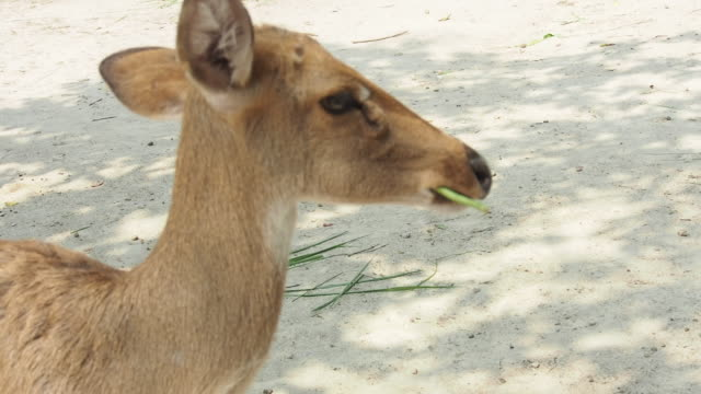 a happy boy stretches out his hand and feeds a food deer - doe stock videos & royalty-free footage