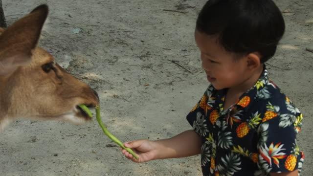 幸せな少年は彼の手を伸ばし、食べ物の鹿を養う - 動物園点の映像素材/bロール