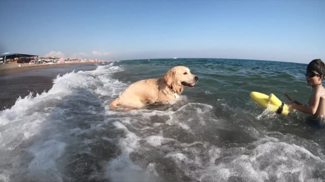 happy boy swimming wit her dog on the sea - golden retriever stock videos & royalty-free footage