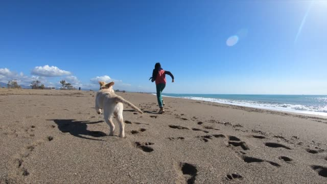 vídeos de stock e filmes b-roll de happy boy wit her dog running at the beach - cão