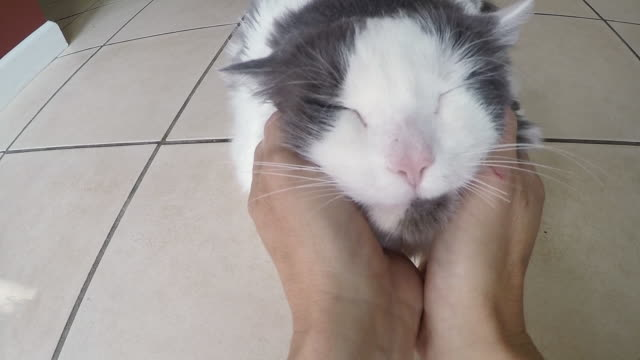 Happy Cat Getting Face Rubbed
