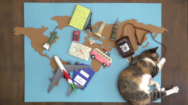 Happy cat making international travel plan on wooden desk