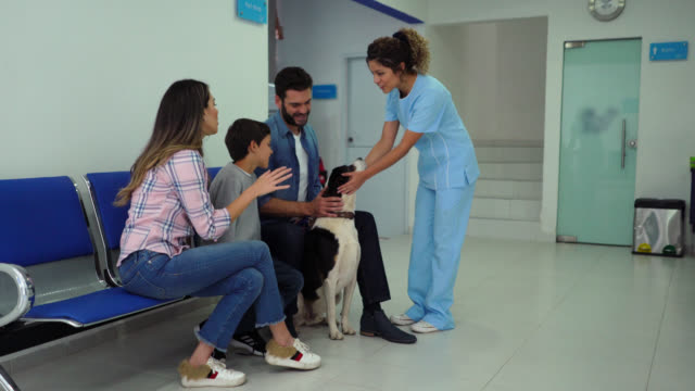 happy couple with a son waiting for the veterinarian to check their mixed breed dog, as she comes out greets everyone and caresses the dog - animal hospital stock videos & royalty-free footage