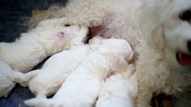 Gelukkige hond voeden haar puppy 's