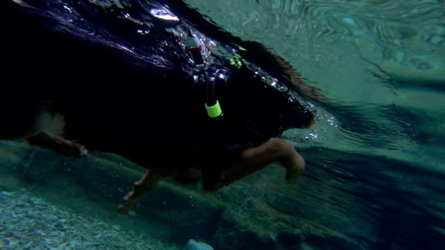 happy dog jumping and underwater swimming into the turquoise water - dog holidays - slow motion - alternative therapy stock videos & royalty-free footage