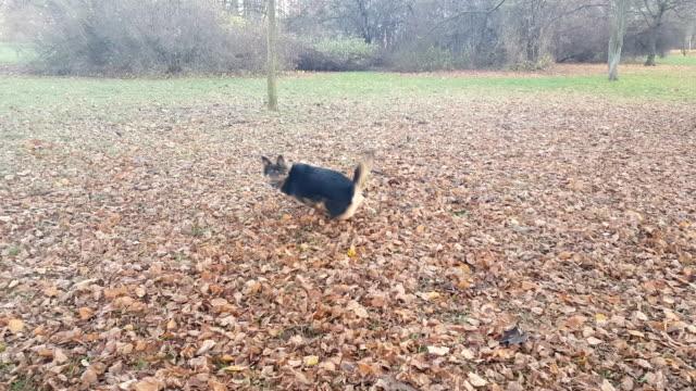 glücklicher hund läuft in einem park. - ast pflanzenbestandteil stock-videos und b-roll-filmmaterial