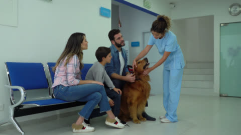 happy family at a veterinary leaving their dog for check up as nice assistant takes him with a leash - stroking stock videos & royalty-free footage