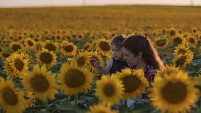 happy family concept, mom and child are playing in sunflowers field at sunset - innocence stock videos & royalty-free footage