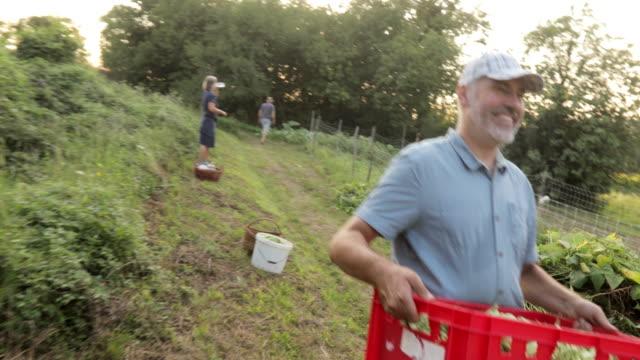 happy farmer carrying basket full of harvested homegrown organic runner bean - runner bean stock videos & royalty-free footage