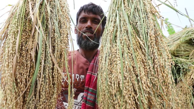 happy farmer holding aromatic paddy in dhaka - 麦わら帽子点の映像素材/bロール