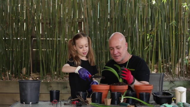 happy father and daughter gardening together - bamboo plant video stock e b–roll