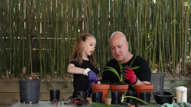 happy father and daughter gardening together - weekend activities stock videos & royalty-free footage
