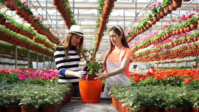 vidéos et rushes de fleuriste féminin heureux aiment leur travail - vendre