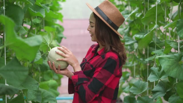 Happy female worker looking at grown cantaloupe in the farm
