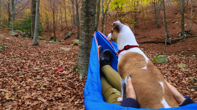 stockvideo's en b-roll-footage met happy girl enjoying autumn season in a nice forest with colorful leafs during trip in the mountain resting in a hammock with his little dog friend who is taking anywhere. - achterover leunen