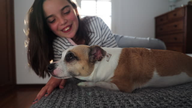 vídeos de stock, filmes e b-roll de happy girl petting beautiful new dog friend at home. - adoção