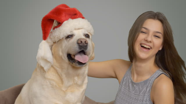 happy girl wears a hat of santa claus to his labrador - santa hat stock videos & royalty-free footage