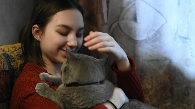 happy girl with her cat indoors - shorthair cat stock videos and b-roll footage