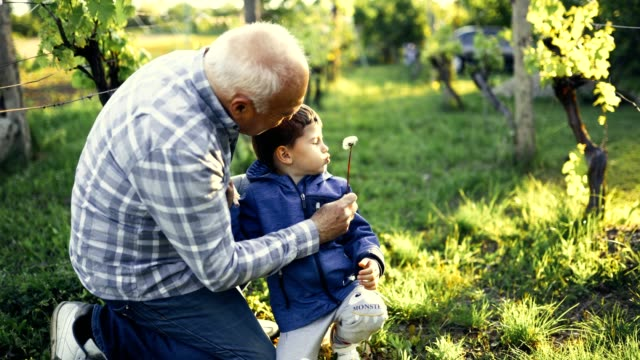 happy grandpa with grandson blowing dandelions in spring - grandchild stock videos & royalty-free footage