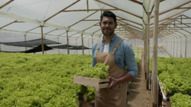 vídeos y material grabado en eventos de stock de feliz agricultor latinoamericano produciendo lechuga orgánica y mirando la cámara sonriendo - bien parecido