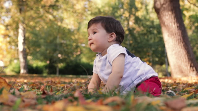 happy little baby boy crawling at public park on beautiful autumn day - crawling stock videos & royalty-free footage