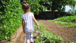 Happy little girl running with strawberry basket in garden. Home-grown fruits and vegetables in the countryside
