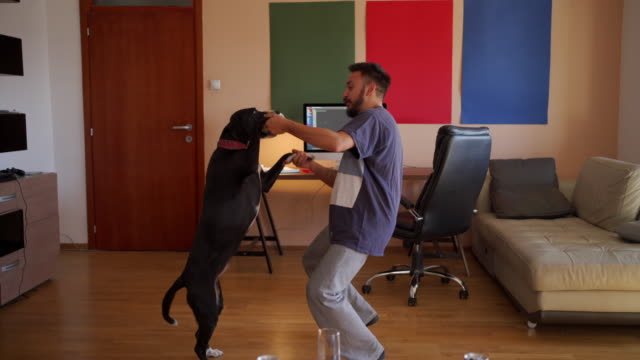 happy man is dancing with his dog in slow motion - curiosity stock videos & royalty-free footage