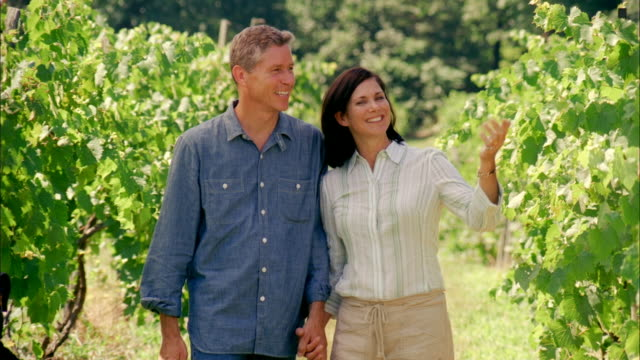 ms, happy mature couple looking at grapes in vineyard, marlboro, new york state, usa - marlboro new york stock videos and b-roll footage