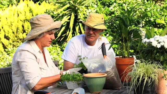happy mature couple potting plants / cape town, western cape, south africa - trädgårdshandske bildbanksvideor och videomaterial från bakom kulisserna