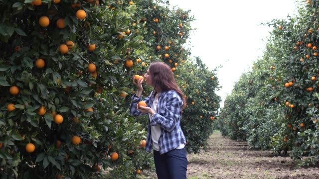 happy mid adult women in orange garden - orchard stock videos and b-roll footage