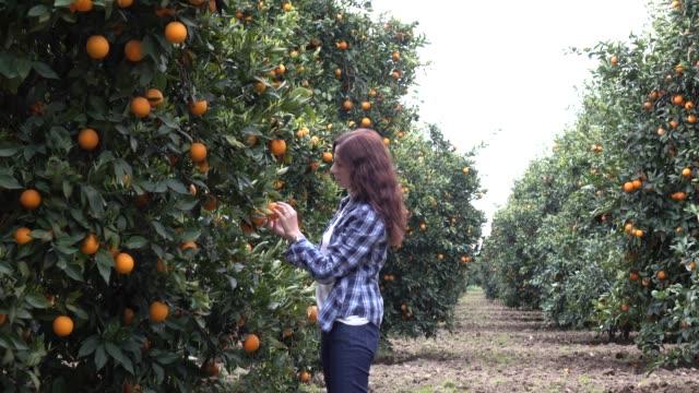 happy mid adult women in orange garden - fruit tree stock videos & royalty-free footage