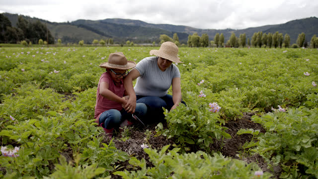 happy mother teaching her daughter how to check the potato harvest using a shovel and checking the soil - south america stock videos & royalty-free footage