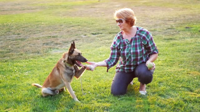 happy owner and her malionis dog - overweight dog stock videos & royalty-free footage