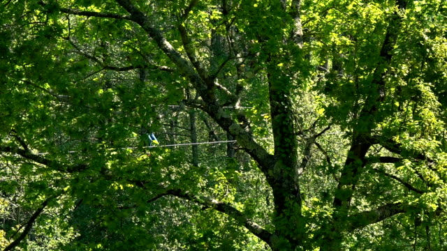 happy pre-teen girl sliding down a zipline among trees - ロープスライダー点の映像素材/bロール