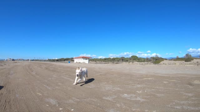 happy puppy dog running at the beach - blue dog stock videos & royalty-free footage