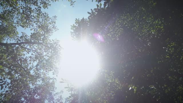 vídeos de stock e filmes b-roll de happy sunny summer day sun flares through tree branches - nostalgia