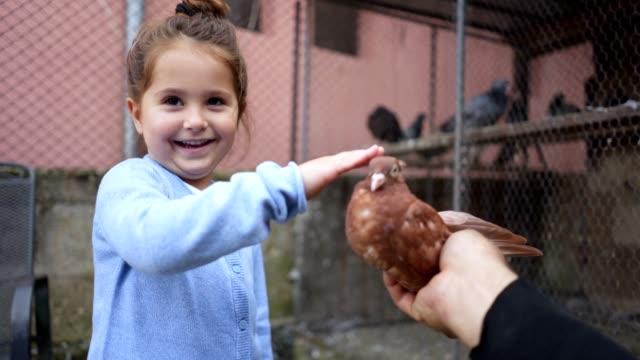 vídeos y material grabado en eventos de stock de niña niño feliz acariciando una paloma - oficio agrícola