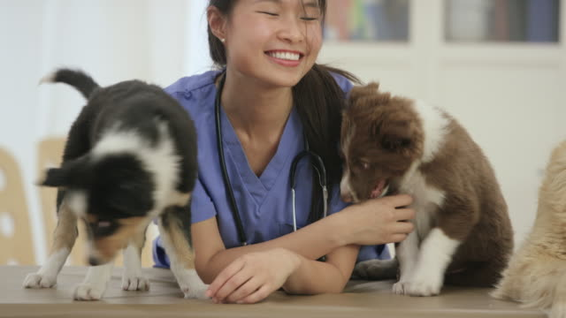 happy vet happy pet - veterinarian stock videos & royalty-free footage