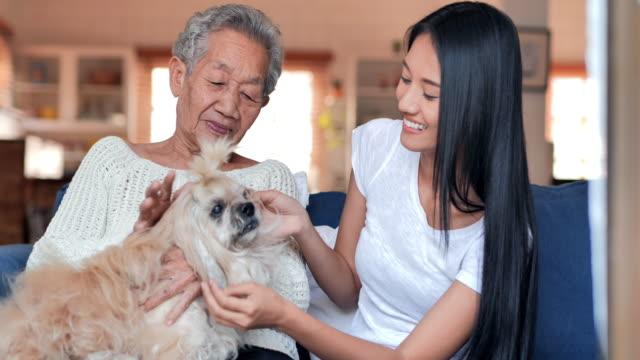 アジアの先輩祖母と幸せなボランティア若い黒人女性の世話人は、自宅で犬と一緒に休んでいます。ライフスタイル、高齢者、高齢者、高齢者の肖像画、ヘルスケアと医学、生命保険、家族� - ペット点の映像素材/bロール