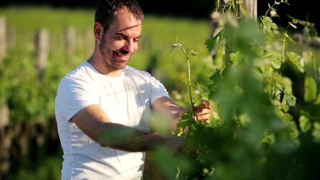 Felice uva e leafes Viticoltore Controlla