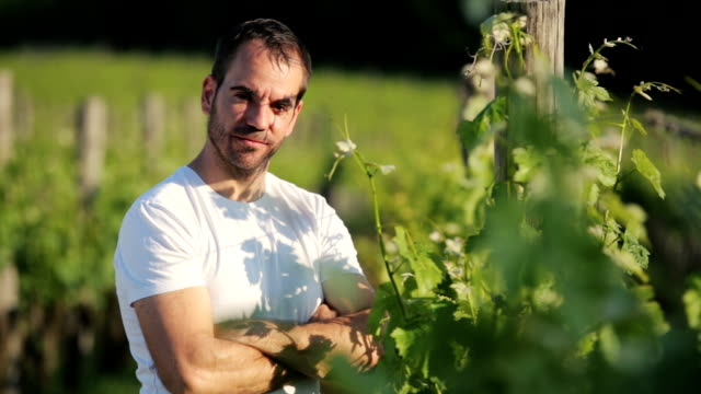 Happy Winegrower checking grape and leafes