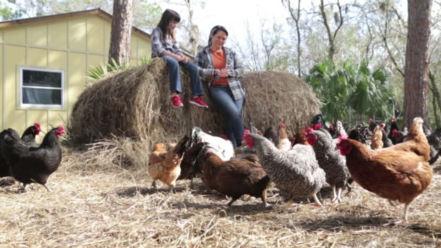 happy woman and daughter feeding chickens in the farmyard - hen stock videos & royalty-free footage
