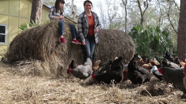Happy woman and daughter feeding chickens in the farmyard