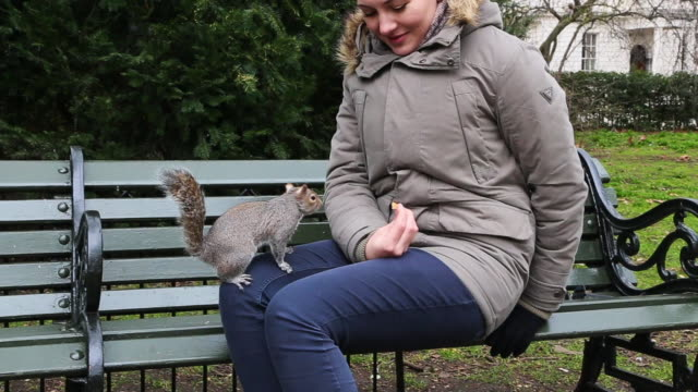 happy woman feeding the hyde park squirrels of london during travel vacations. - 東ヨーロッパ民族点の映像素材/bロール