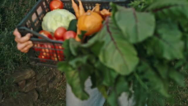 glad kvinna som håller låda med färska ekologiska grönsaker - bära bildbanksvideor och videomaterial från bakom kulisserna