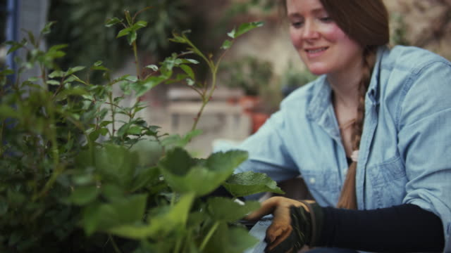 happy woman planting flowers in a diy plant pot. - ponytail stock videos & royalty-free footage