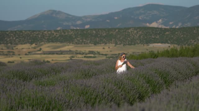 happy women picking up lavender flower - one mature woman only stock videos & royalty-free footage