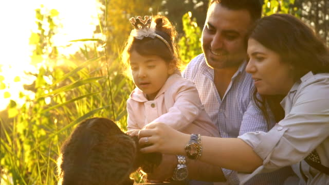 happy young family stroking a cat at sunset - princess stock videos & royalty-free footage